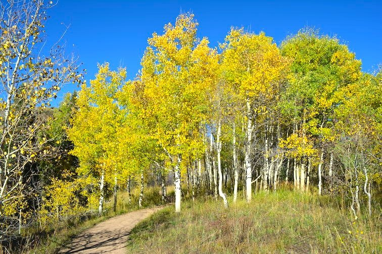 Colorado Aspen Mountain Hiking Autumn Fall Trail Yellow Green