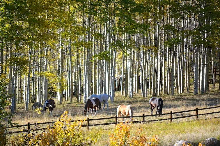 Colorado Aspen Mountain Hiking Autumn Fall Trail Horses Fence Wood