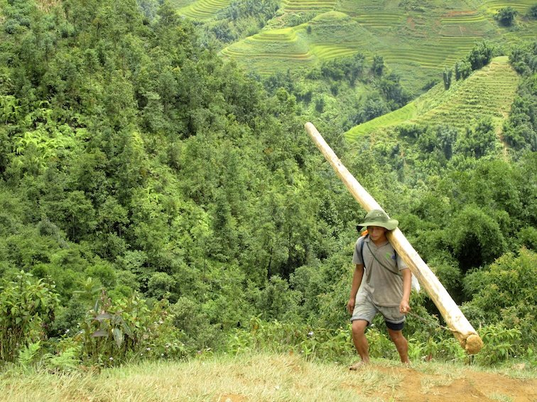 Sapa Vietnam Rice Fields Southeast Asia Log Wood Labor