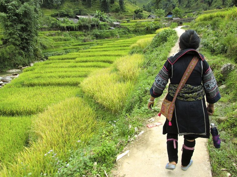 Sapa Vietnam Rice Fields Southeast Asia Guide Walk Hike