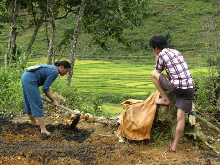 Sapa Vietnam Rice Fields Southeast Asia Labor Woman Work Field