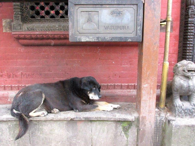 Swayambhumath Monkey Temple Kathmandu Nepal Dog