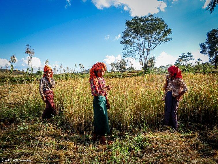 Myanmar Burmese Farm Girls