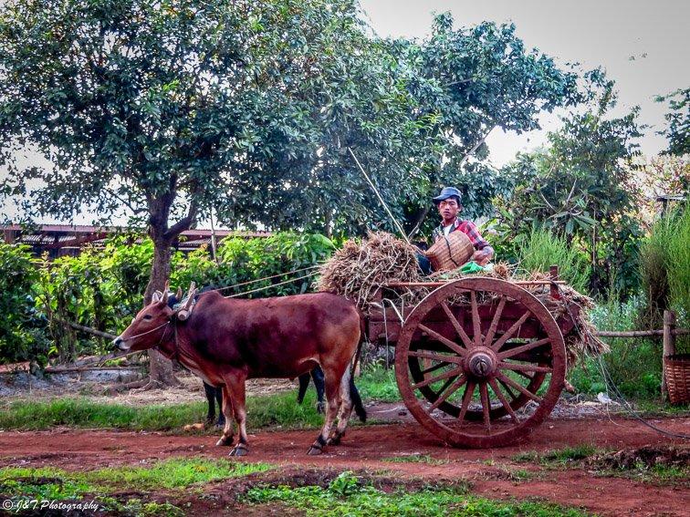 Myanmar Inle lake kalaw hike ox cart