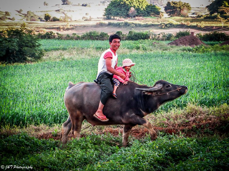 Myanmar farm man and child on ox portrait