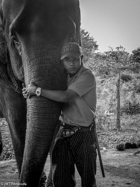 Myanmar elephant mahut portrait