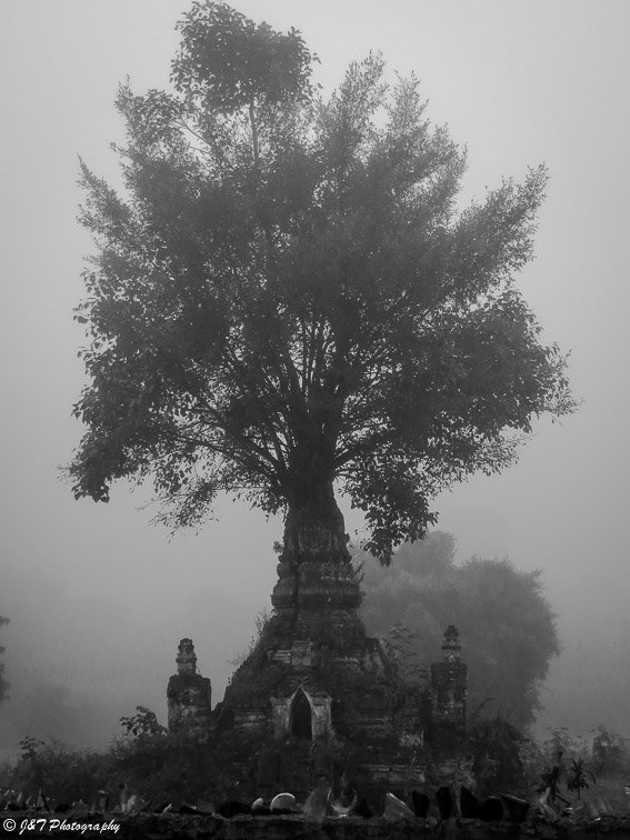Myanmar Hsepaw stupa tree
