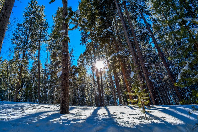 Colorado Aspen Showshoeing Snow Trees Backcountry Hiking