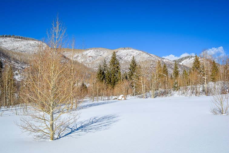 Colorado Aspen Showshoeing Snow Trees Backcountry Hiking Valley