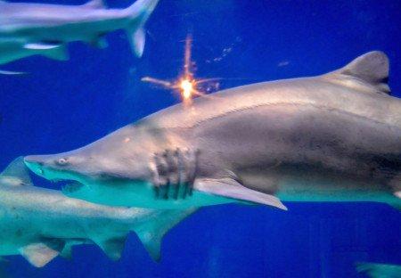 Shark Diving Denver Colorado Aquarium