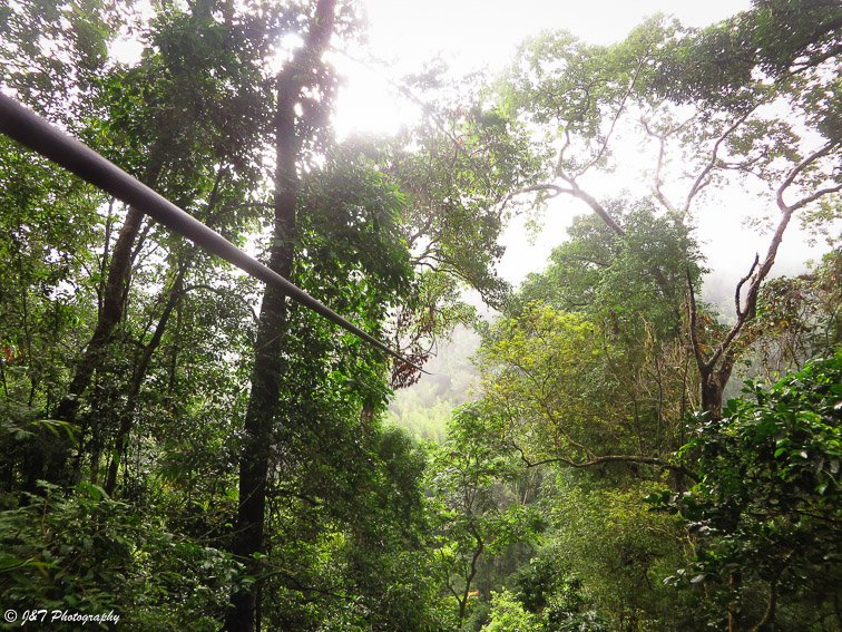 the gibbon experience laos
