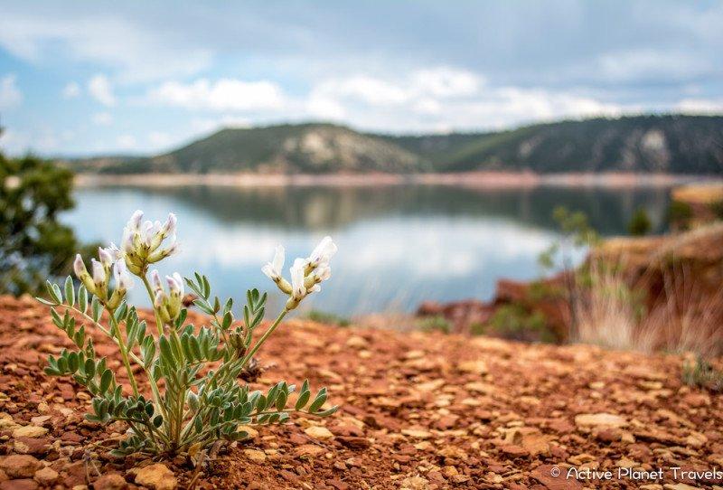 Glendo State Park Wyoming Lake Red Rock Water Flower White