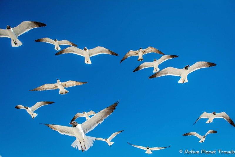 Clearwater Beach Florida Ocean Sea Seagulls Birds