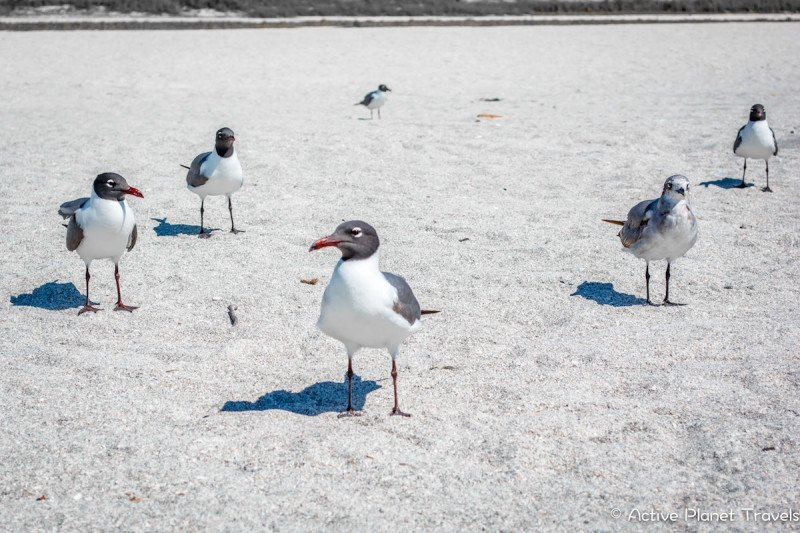 Clearwater Beach Florida Ocean Sea Seagulls