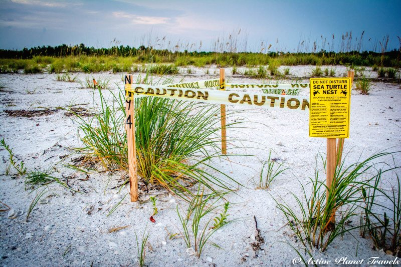 Naples, Florida, Beach, Gulf of Mexico, Sea Turtle, Caution, Sea, Beach