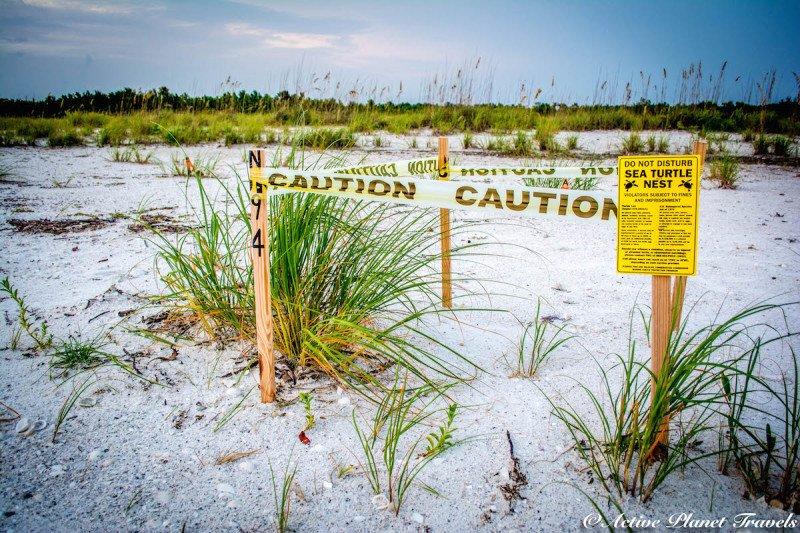Naples, Florida, Beach, Gulf of Mexico, Sea Turtle, Caution, Sea, Beach