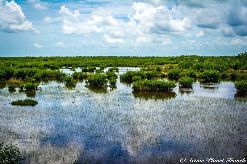 Naples, Florida, Beach, Gulf of Mexico, Sea Turtle, Caution, Sea, Beach, Everglades