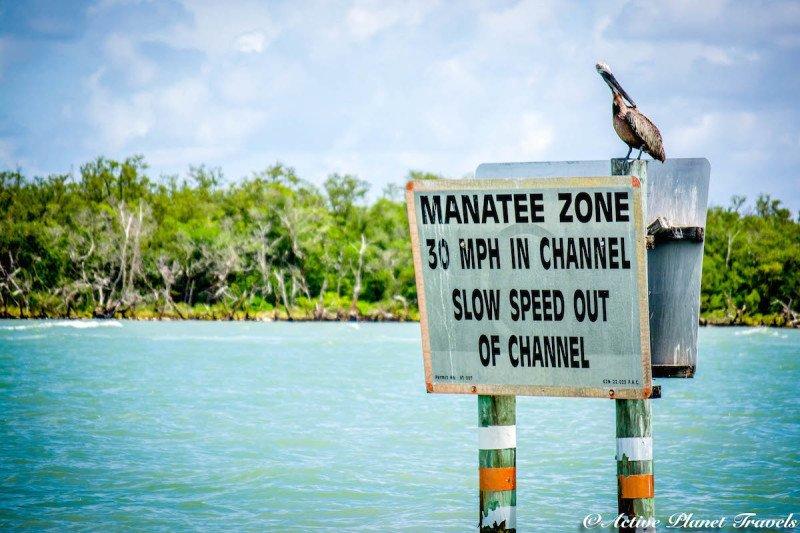 Naples, Florida, Beach, Gulf of Mexico, Sea Turtle, Caution, Sea, Beach, Manatee, Pelican