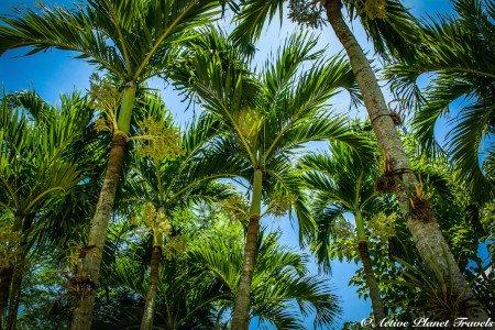 Naples, Marco Island, Palm Tree, Florida, Beach