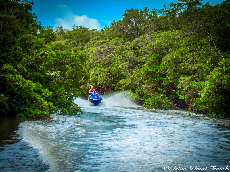 Captain Ron Awesome Everglade Adventure Naples Marco Island Florida Mangrove Tree Jet Ski