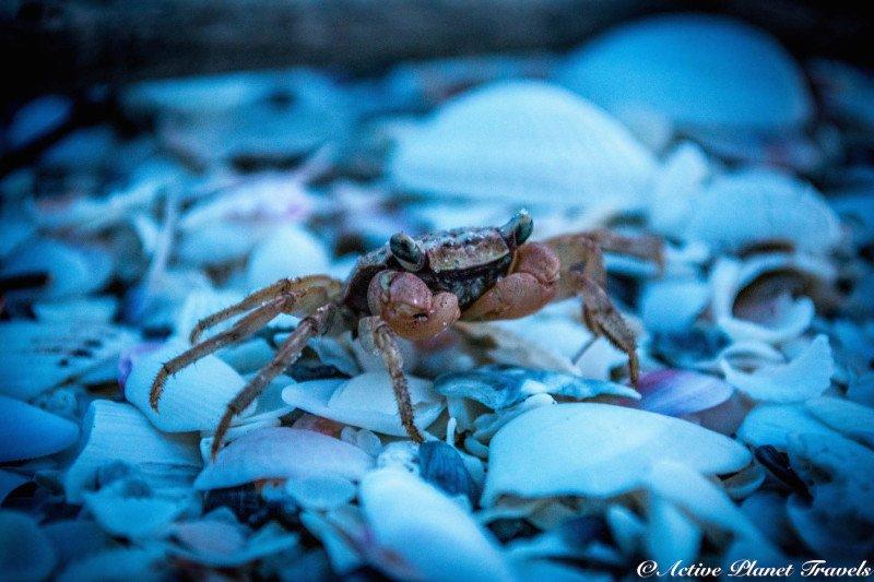 Naples Paradise Coast Florida Botanical Garden Flowers Crab