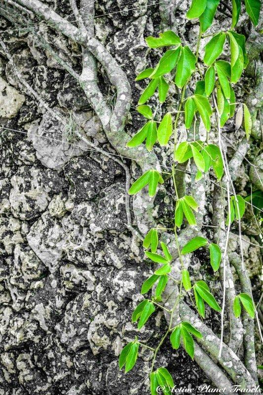 Naples Paradise Coast Florida Botanical Garden Flowers Vine Rock Wall