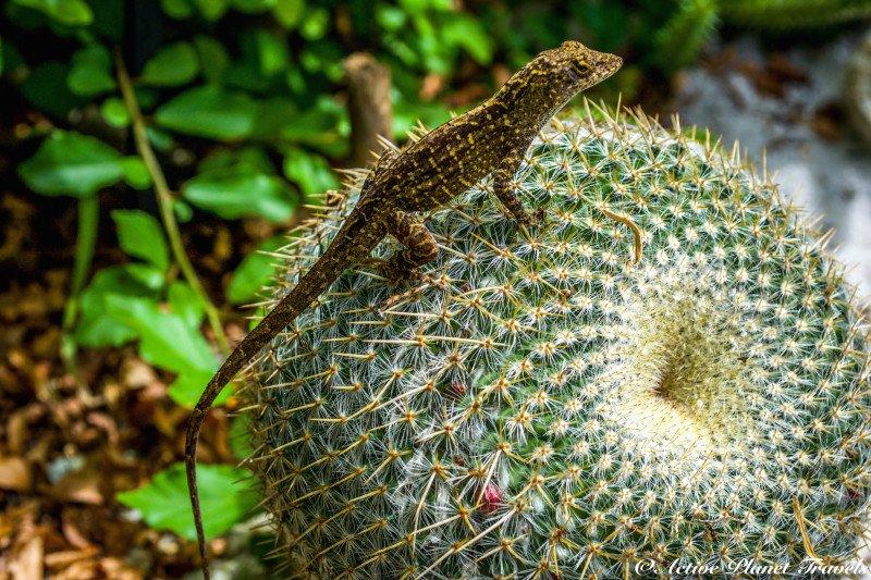 Naples Paradise Coast Florida Botanical Garden Flowers Lizard Cactus