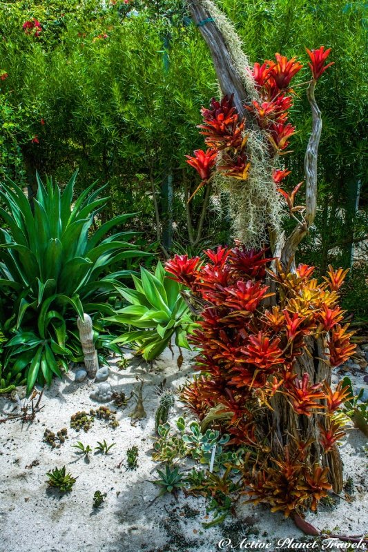 Naples Paradise Coast Florida Botanical Garden Flowers Cactus Air Plant
