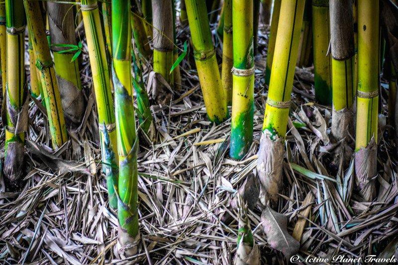 Naples Paradise Coast Florida Botanical Garden Flowers Bamboo