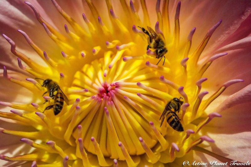 Naples Paradise Coast Florida Botanical Garden Flowers Bees Yellow Pink