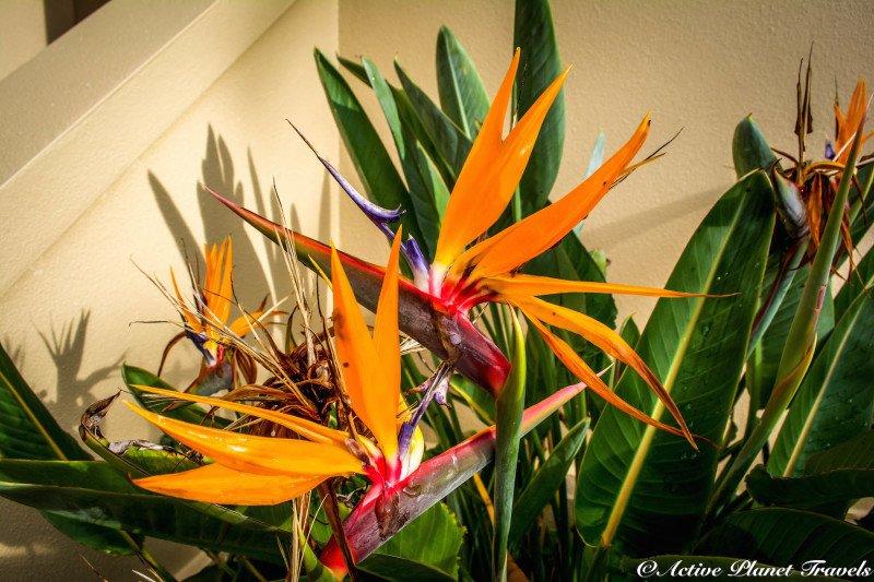Naples Paradise Coast Florida Botanical Garden Flowers Bird of Paradise
