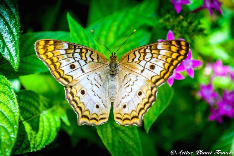 Naples Paradise Coast Florida Botanical Garden Flowers Butterfly Garden