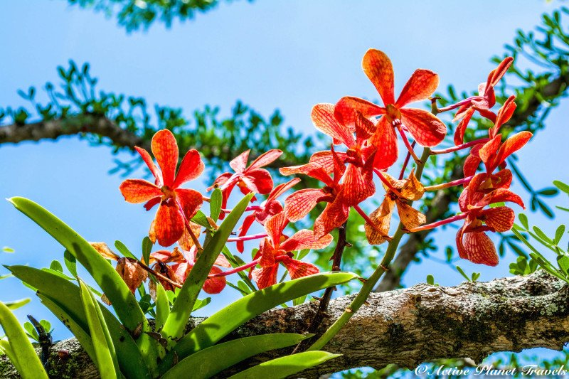 Naples Paradise Coast Florida Botanical Garden Flowers Red Orchid