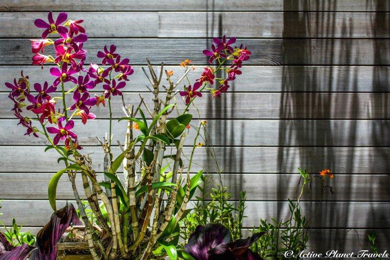 Naples Paradise Coast Florida Botanical Garden Flowers Orchid Violet