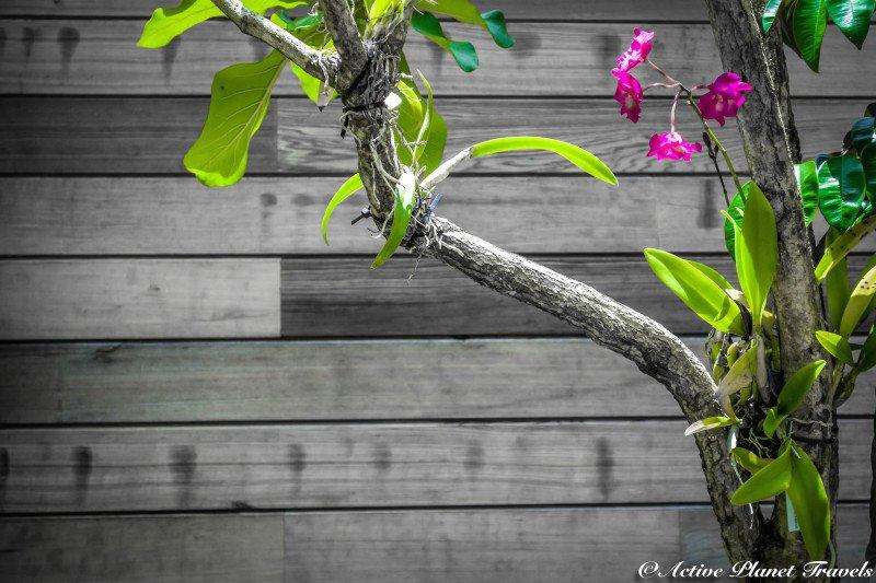 Naples Paradise Coast Florida Botanical Garden Flowers Orchid Violet Pink Purple