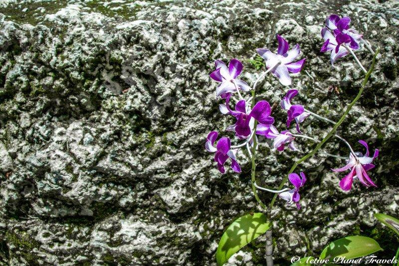 Naples Paradise Coast Florida Botanical Garden Flowers Orchid Purple Violet