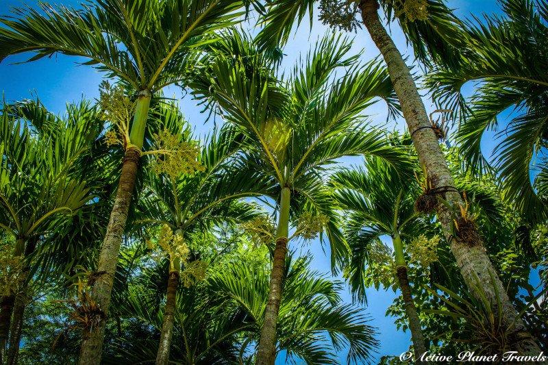 Naples Paradise Coast Florida Botanical Garden Flowers Palm Trees