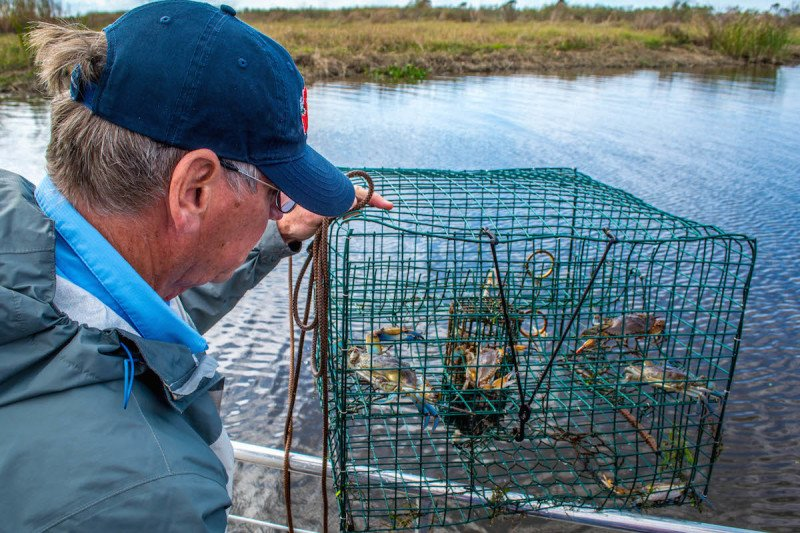 Cajun Encounters New Orleans Swamp Tour Louisiana Blue Crab Guide