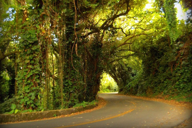 Nuuanu Rainforest Road Maui Hawaii
