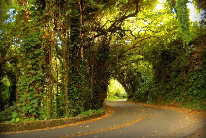 Nuuanu Rainforest Road Maui Hawaii