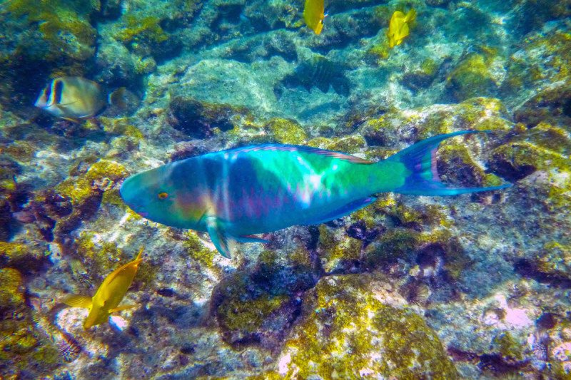 Rainbow Hawaii Snorkel Dive Fish Marine Ocean Sea Reef