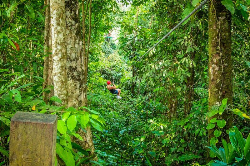 zip line rainforest jungle zipline