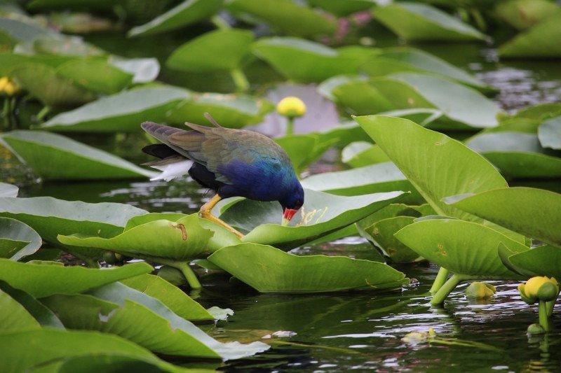 Naples, Florida, Everglades, Cypress, Swamp, Water Bird