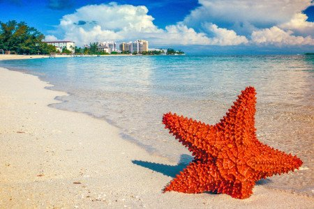 Starfish on the beach at Bahamas Caribbean Resort.