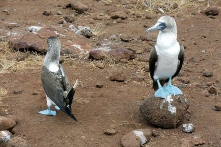 Top 3 Reasons You MUST Visit the Galapagos Islands