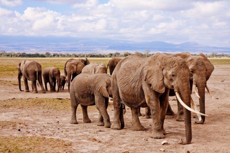 Elephant South Africa Desert Safari