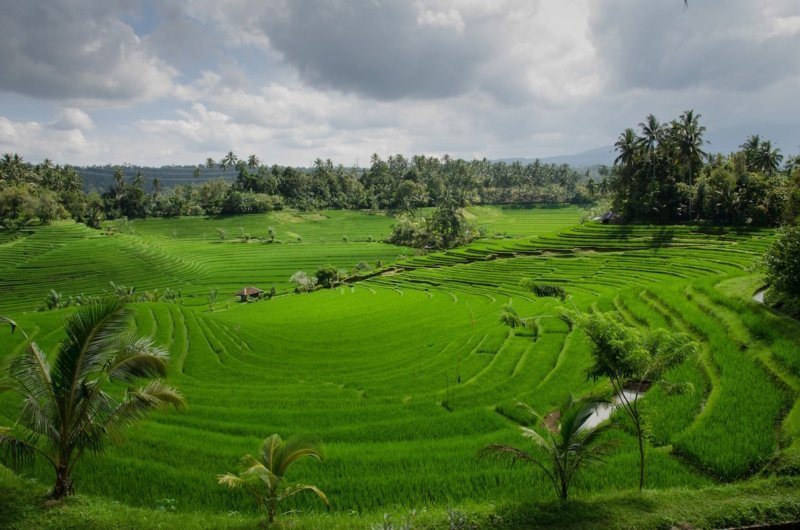 Southeast Asia Northern Laos Rice Field
