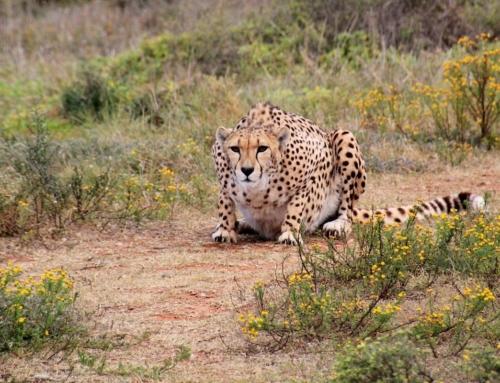 3 Best Luxury Adventure Safari Destinations in Africa