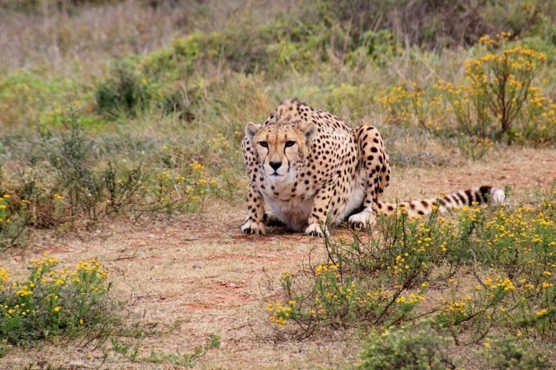 3 Best Luxury Adventure Safari Destinations in Africa