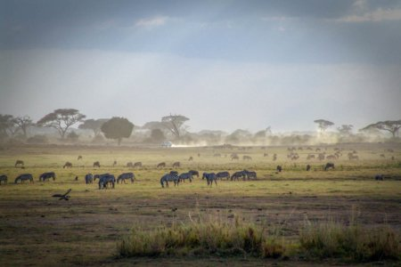 How to Experience the Magic of a Kenyan Safari